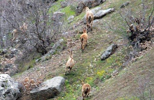 145 bin faal avcı var, avcılıkla katledilen hayvan sayısı ise meçhul