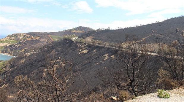 Foça'da 80 hektar orman küle döndü