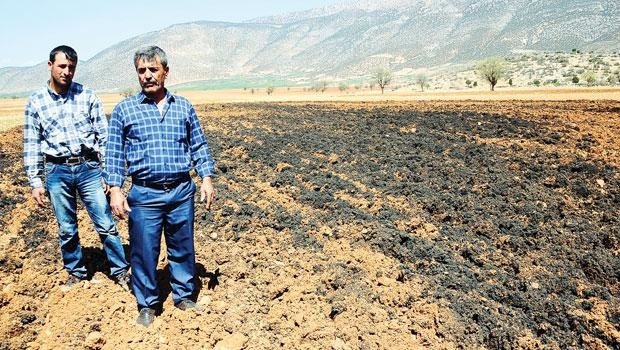 Çaresiz kalan köylü zehire batmış tarlaları yeniden ekmeye başladı