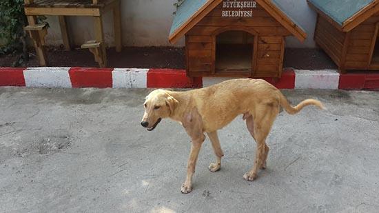 Bursa'da sokak hayvanlarının toplu katliamına karşı BİMER başvurusu yapalım