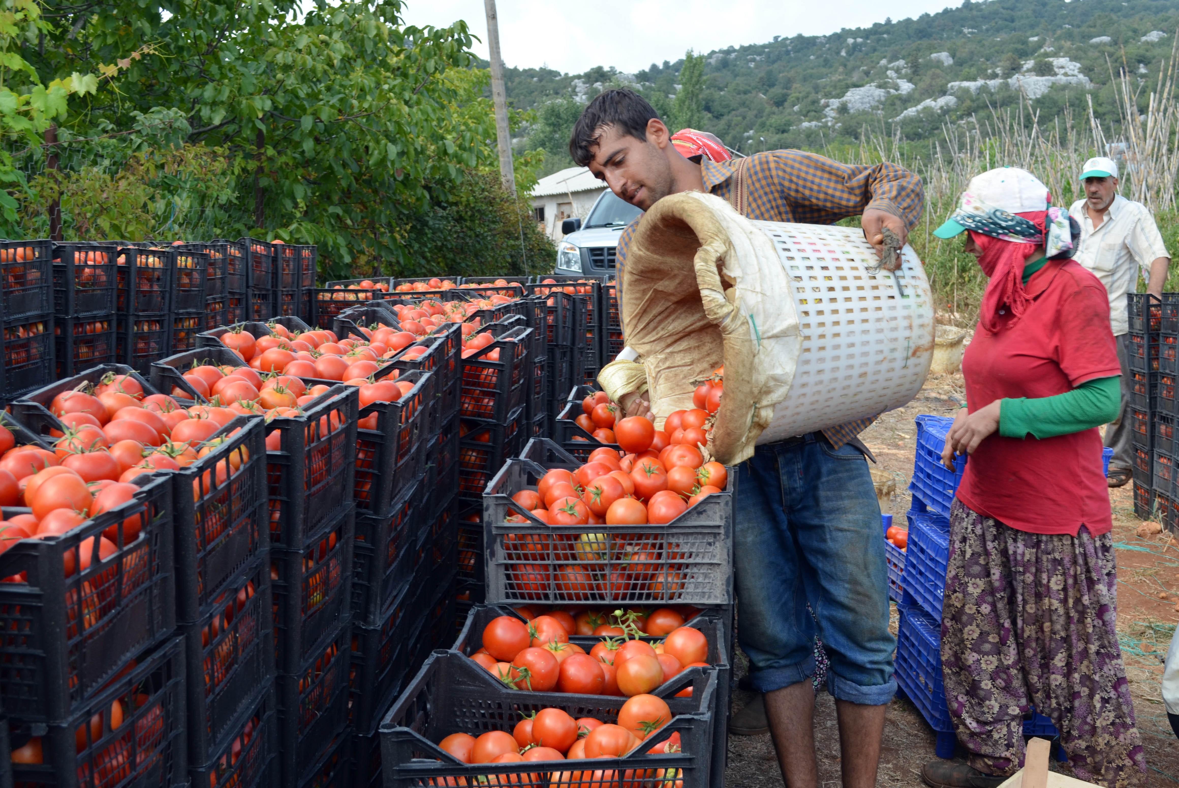 Çiftçi Sen Başkanı Aysu: 10 liralık domatesin 9 lirası aracının cebinde