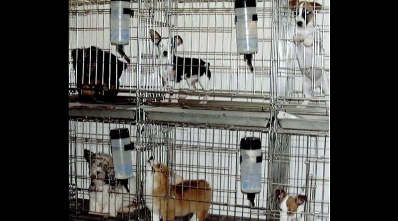 Bakanlıktan hayvan satışına göstermelik yasak!