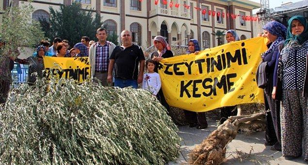 Kolin'e bir kıyak daha: Yırca'da zeytinliklerin içine termik santral yapımını engelleyen '3 kilometre uzaklık' şartı kaldırılıyor