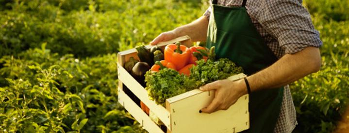 Organik tarım Türkiye'yi doyurur!