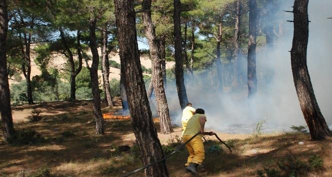 Çanakkale Bayramiç'te ormanlık alanda sigara izmaritinden yangın çıktı
