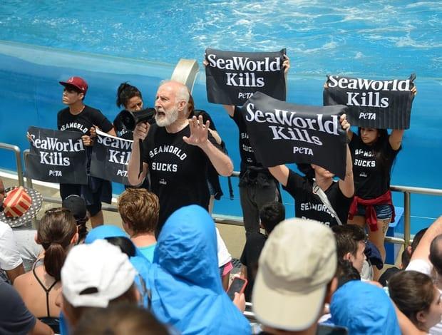 Vegan aktör James Cromwell, 'balinaları kurtarın!' eyleminde tutuklandı
