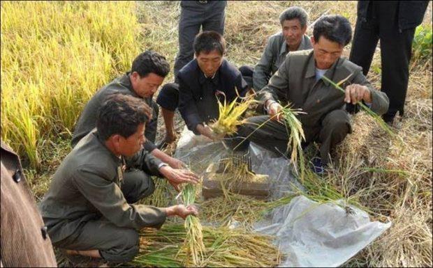 Kuzey Kore'yi kuraklık vurdu: Ülke nüfusunun büyük bölümü gıda güvenliği tehdidi altında