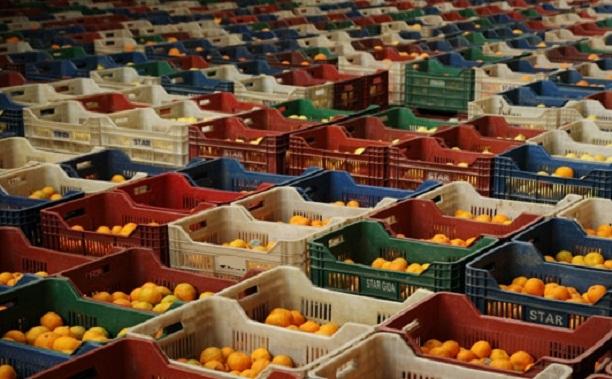 10 başlıkta yerel çeşitler düzenlemesi: Tarımda yerel çeşitlere şirket tekeli
