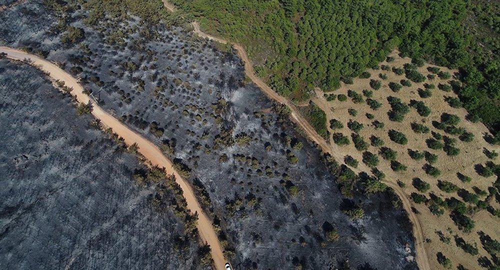 Ayvalık Hakkıbey Yarımadası'nda çıkan yangında sabotaj olasılığı meclis gündemine taşındı