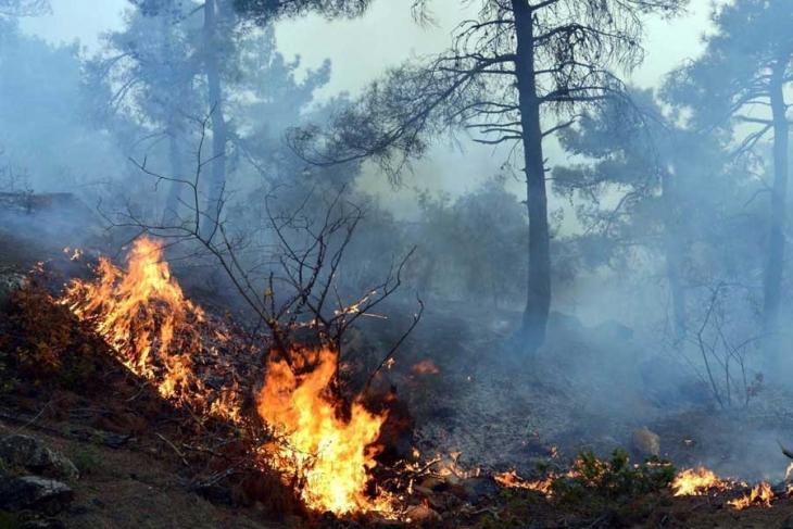 Ormanı yakılan karınca