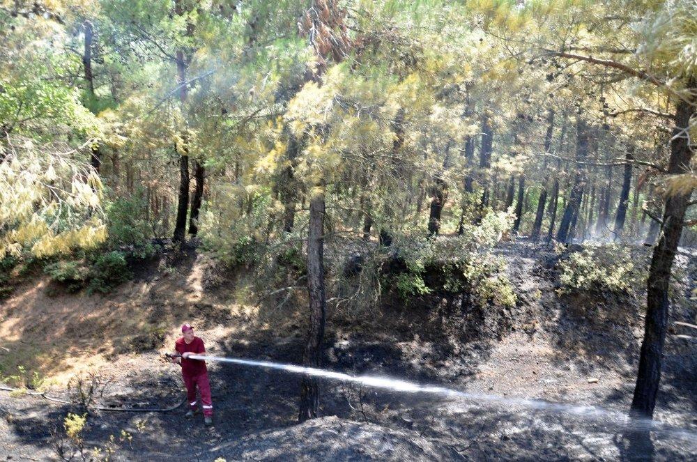 Tekirdağ Malkara'da çıkan yangında 50 dönüm ormanlık alan tahrip oldu