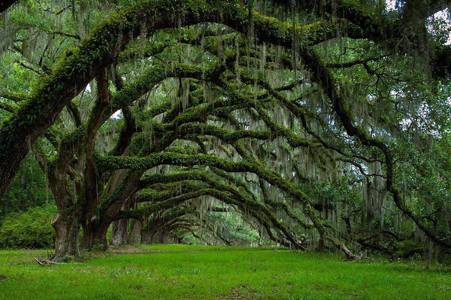 Ağaçların bilgeliği
