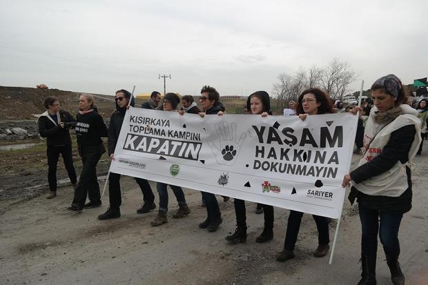 Türkiye'de hayvan hakları: Ne yasa ne tasa!