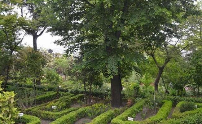 Müftülüğe devredilen botanik bahçesi yok olabilir!