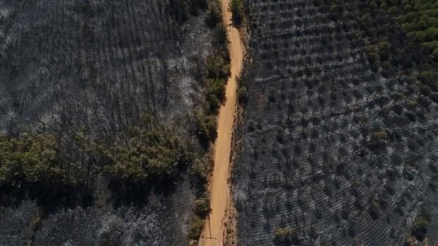 2018 Yazı, Orman Yangınlarının Yazı Oldu