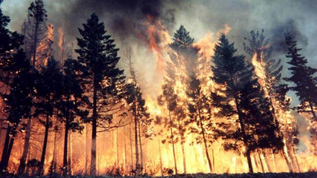 Sakarya ve Kocaeli'de yangın tehlikesi sebebiyle ormanlara girmek yasaklandı