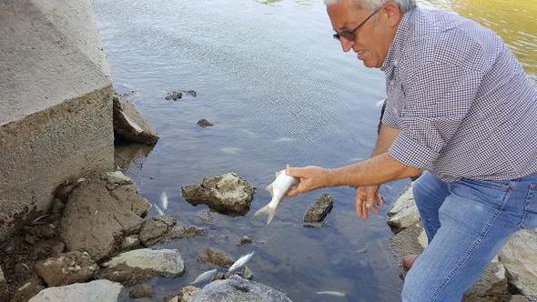 Sakarya Nehri'nde çok sayıda balık ölümü yaşandı; nehirde oksijen oranının düşük olduğu belirlendi