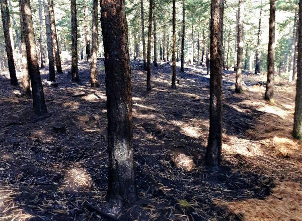 Kazdağları'nda çıkan bitki örtüsü yangını ağaçlara sıçramadan söndürüldü