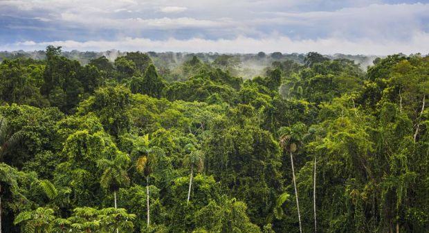 Brezilya'da çevre ve toprak hakkı mücadelesi sonuç verdi!: Amazonlar madenciliğe açılmıyor