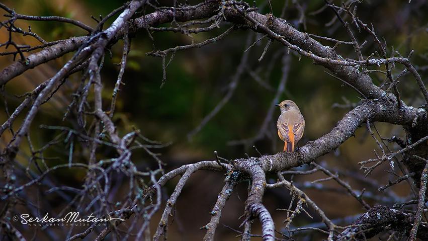 Ankaralı kuş gözlemciler, Dünya kuş gözlem gününde ODTÜ Ormanı'nda buluşuyor