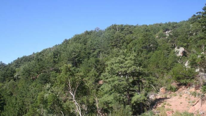Madra Dağı'na etkisi yüz yıl sürecek zehir bırakılacak