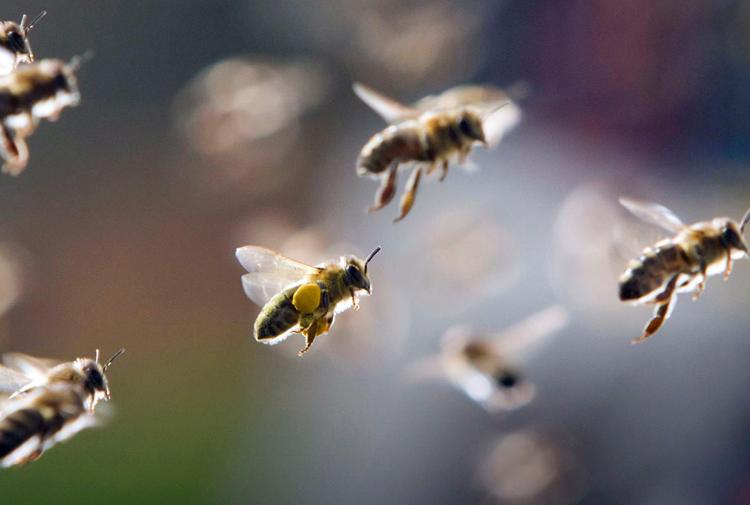 Ekolojik bir 'kıyamete' doğru: Almanya'da uçan böceklerin sayısı yüzde 75 oranında düştü