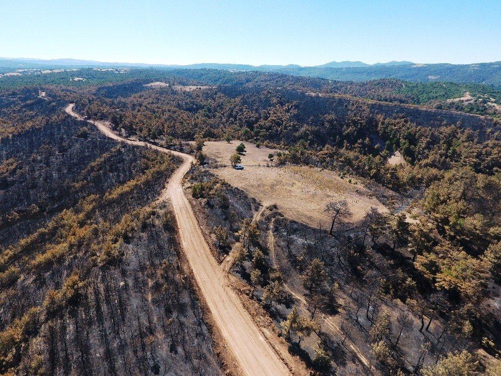 Çanakkale'de bu yıl çıkan 42 orman yangınında 319 hektar alan tahrip oldu