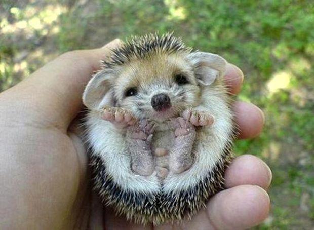 4 Ekim Dünya Hayvanları Koruma Günü: Yasalar hayvan haklarını korumada yetersiz