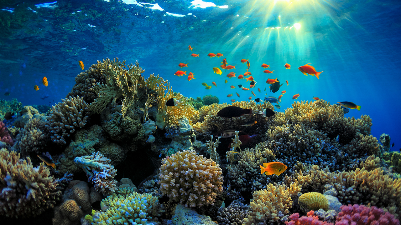 Mercan resifleri can çekişiyor!