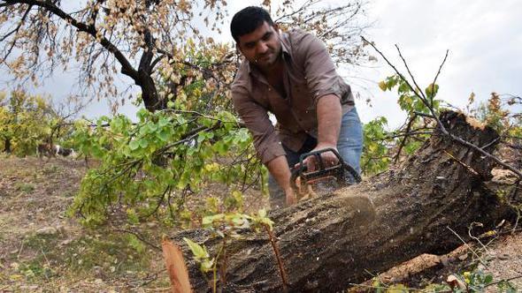 Malatyalı kayısı üreticisi 2 milyon kayısı ağacını kesti