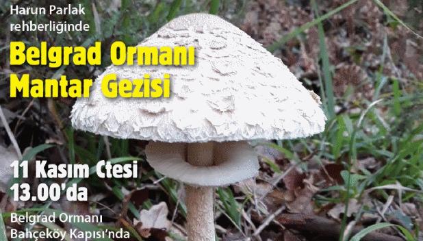 Kuzey Ormanları Savunması, Harun Parlak rehberliğinde Belgrad Ormanı'na mantar gezisine çağırıyor
