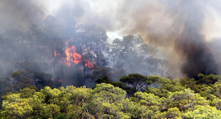 Türkiye'de 8 Günde 100 Orman Yangını Çıktı