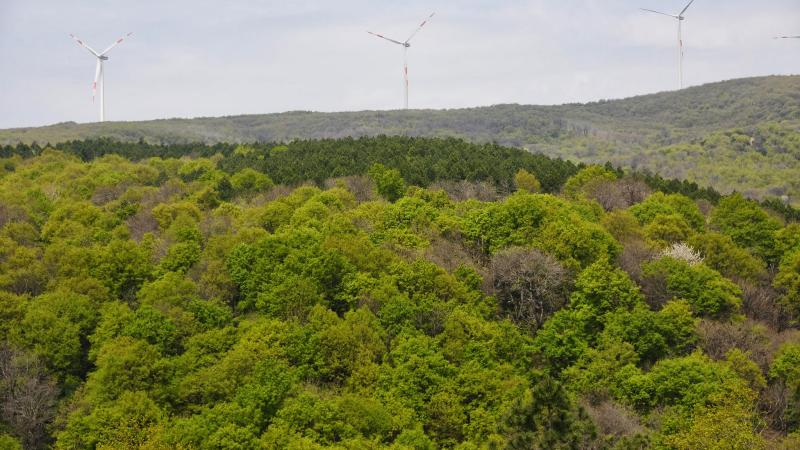 Silivri'de taş ocağı için ormanlık alanı patlatarak yok edecekler