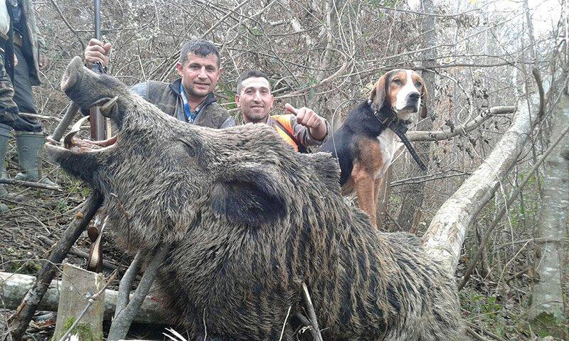 Av çeteleri yaban hayvanlarını katletmeye devam ediyor