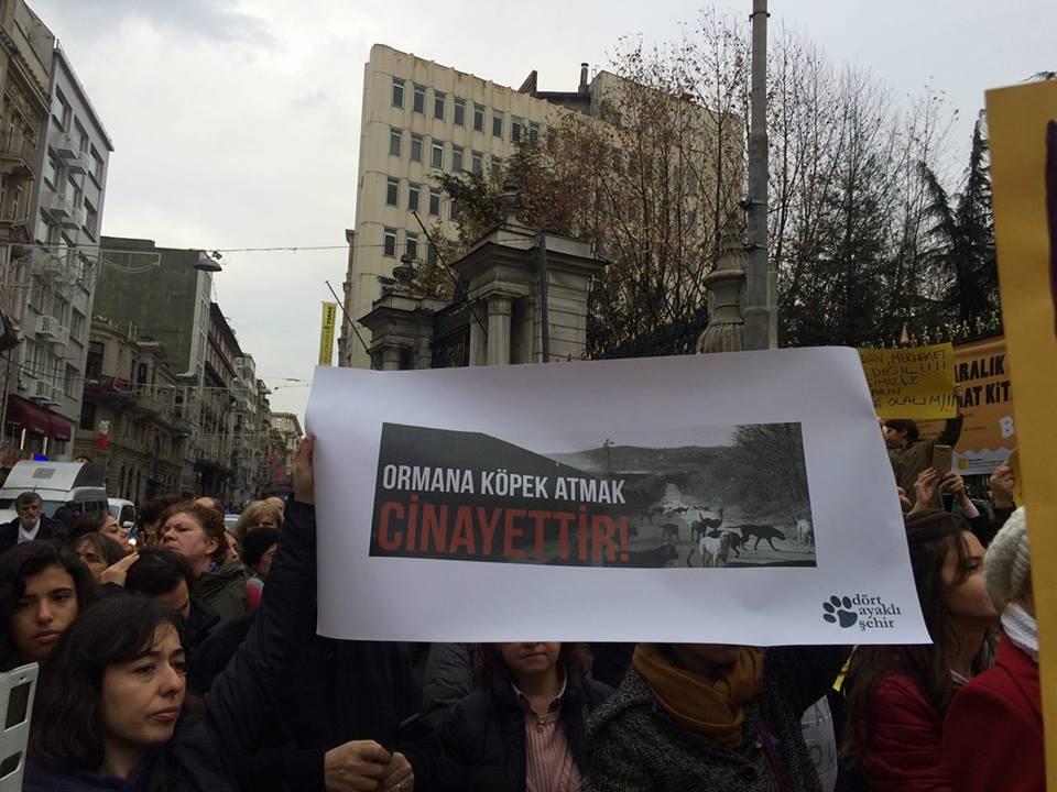 """Hayvan hakları savunucuları sokakta: """"Ormana köpek atmak cinayettir!"""""""