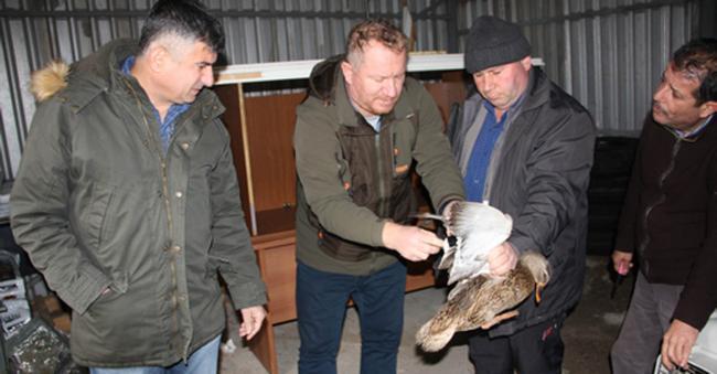 Av çetesi gümelerini basan ekipler kanat tüyleri koparılmış halde 19 yaban ördeği buldu!