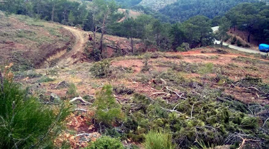 Balıkesir'de 'gençleştirme' adı altında yine bölgesel ağaç kıyımı yapıldı