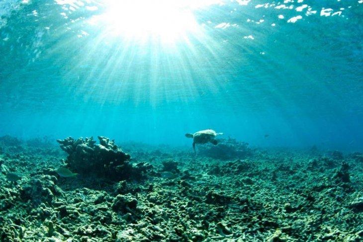 Okyanuslar hiç bu kadar ısınmadı