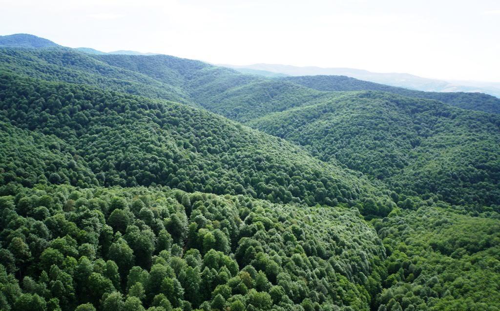 Onbinlerce ağaca kıyarak Kuzey Ormanları'nı ikiye bölecek projenin ÇED toplantısını müftülükte yapacaklar