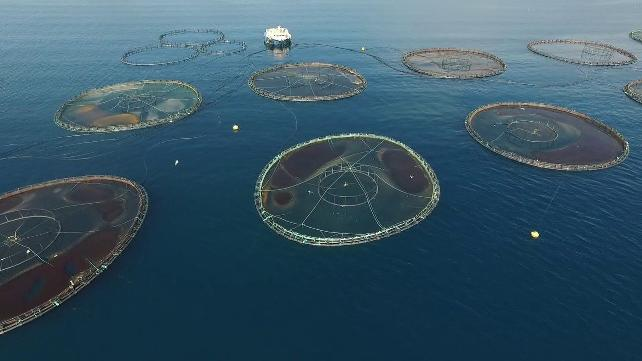 Mersin'de dünyanın en eski tersanelerinden birine balık çiftliği kurmak istiyorlar