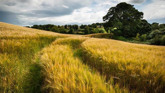 Buğdayın anavatanıyız, buğday ithalatında rekor kırmaya devam ediyoruz!