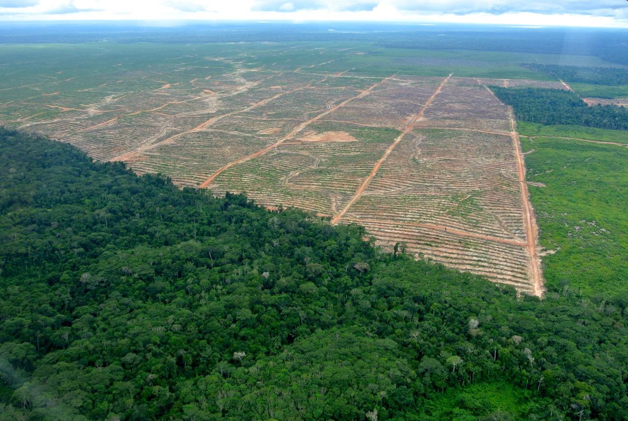 Peru'da kakao ve palm yağı şirketlerine karşı ormanları savunan yerliler ve aktivistler ölüm tehdidi altında