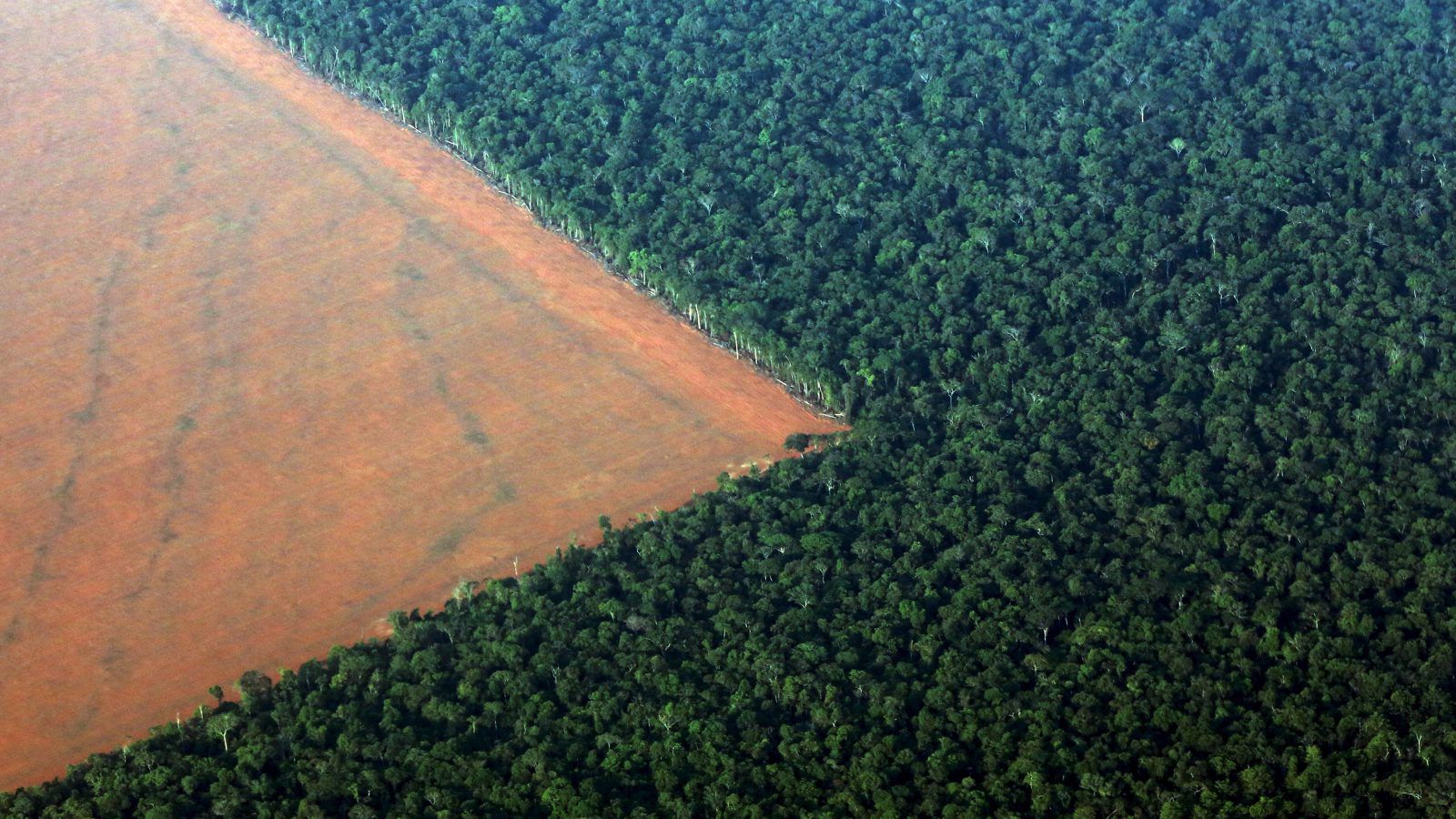Brezilya'nın yeni başkanı Amazon'u yağmalamayı planlıyor
