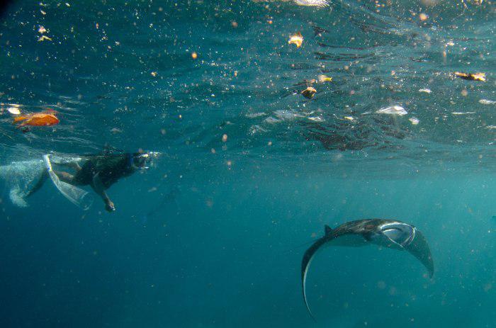Okyanuslara dağılan mikroplastikler büyük deniz canlılarını zehirliyor
