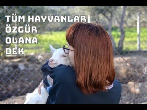Türkiye'nin ilk kurtarılmış çiftlik hayvanları barınağının yardıma ihtiyacı var