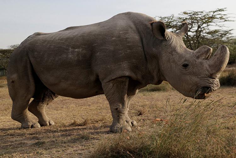 Türleri yok olma sınırında bulunan 10 hayvan