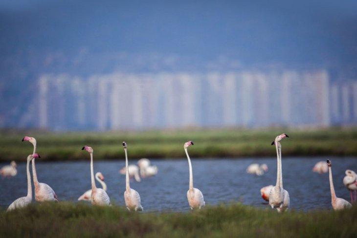 Flamingo yolu