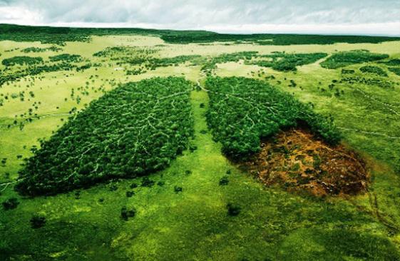 KESK Tarım Orkam Sen: Orman Kanunu Otuzuncu Kez Değiştiriliyor!