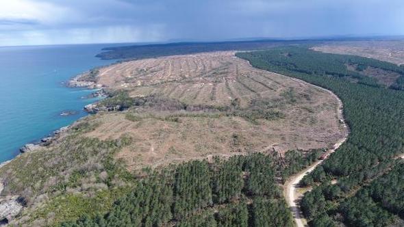 Nükleer santral Sinop ve Karadeniz'in doğal yaşam alanlarını geriye dönülemeyecek şekilde tahrip edecek