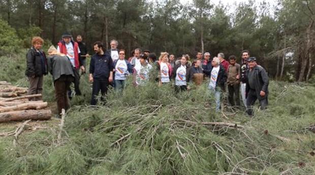 Foça'da çam ağaçlarının kesimi süresiz durduruldu